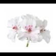 Geranium – Muskátli illóolaj 15 ml - doTERRA