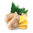 Ginger – Gyömbér illóolaj 15 ml - doTERRA