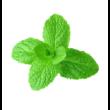 Spearmint – Fodormenta illóolaj 15 ml - doTERRA