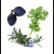Zendocrine Detoxification belnd oil 15 ml - doTERRA